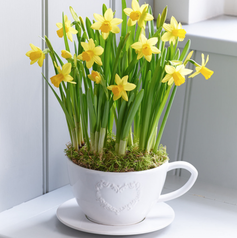 Spring Tete a Tete Narcissi Teacup and Saucer